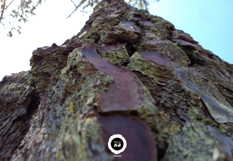 Pormenor da casca de uma árvore
